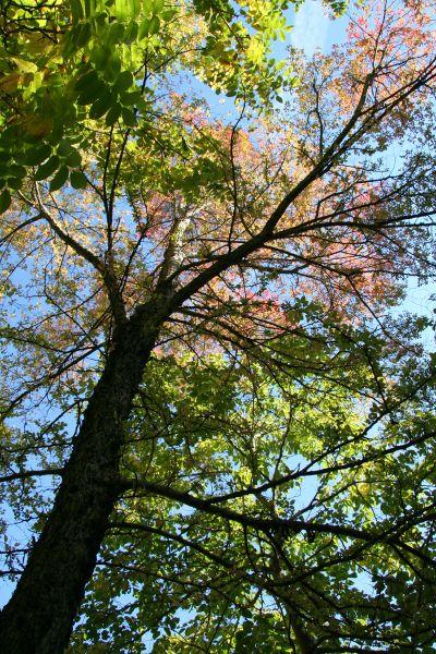 bäume behält seine blätter das ganze jahr